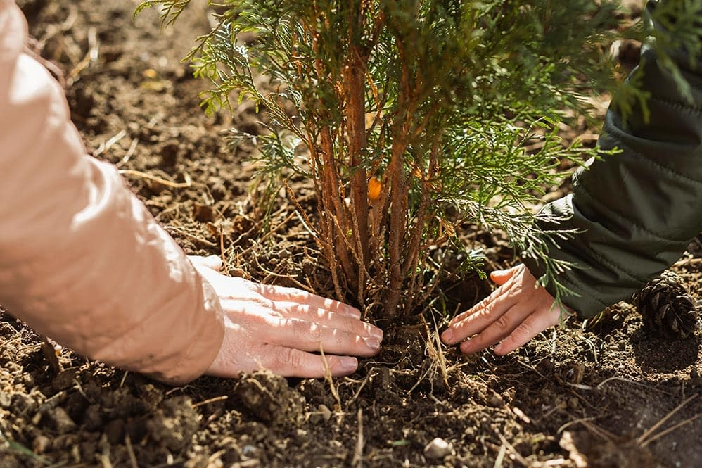 tree planting in new zealand